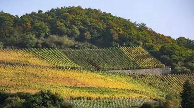 Verantwortung für eine außergewöhnliche Kulturlandschaft: Weinberge bei Kaub. (Foto: Piel media)