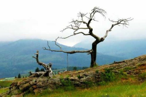 stablo prstenovi apsolutno datiranje