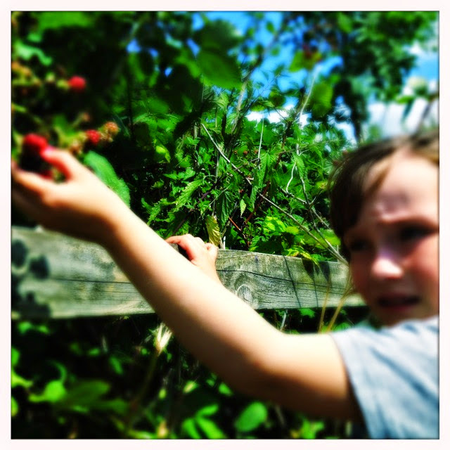 Bug, bird and bee blackberry picking