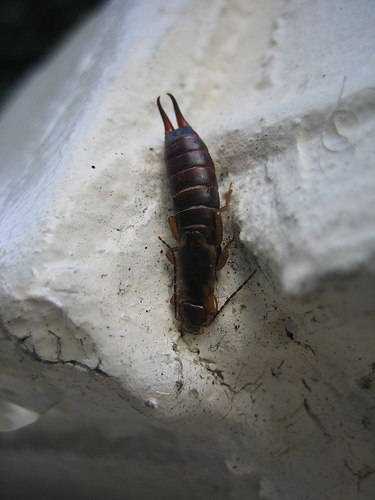 insect removal from home
