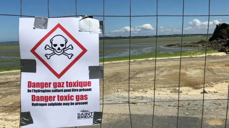 """Bretagne: en 2021, une """"prolifération très importante"""" d'algues vertes"""