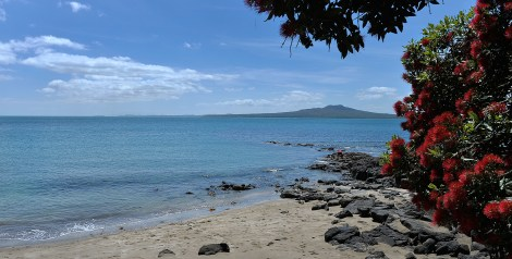 Rangitoto with the Pohutakawas