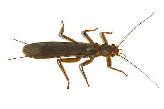 Blackstone River Bugs  Environmental Science