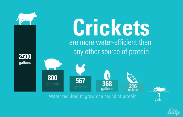 Crickets are Water-Efficient