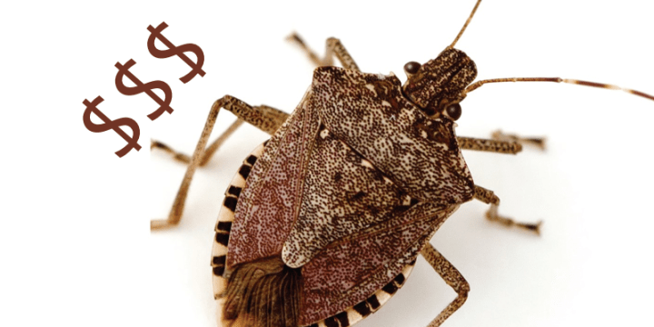 Edible Insect Markets to Expand in Africa