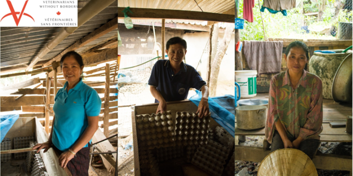 New Research on Small-Scale Cricket Farming in Laos