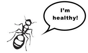 healthy bugs