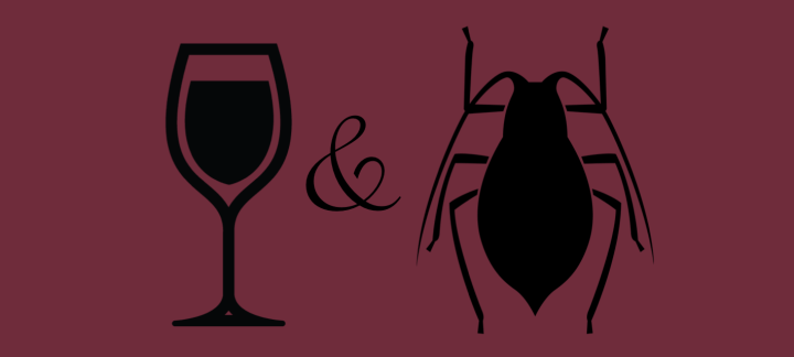 A Chef's Take on Wine and Bugs