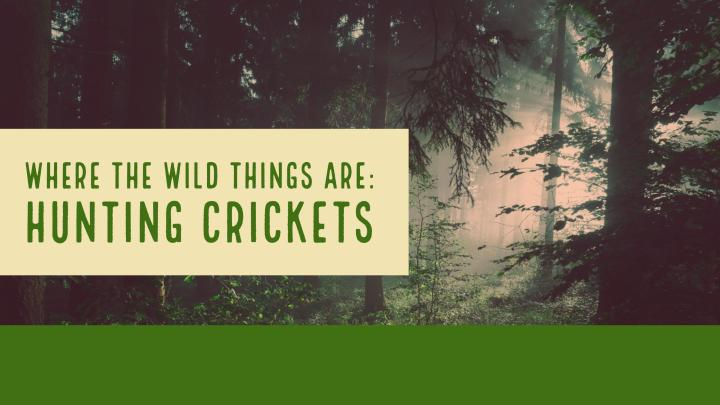 Where the Wild Things Are: Hunting Crickets