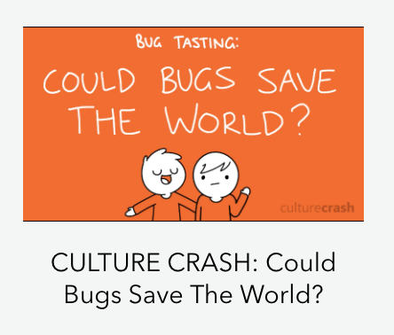 culture crash