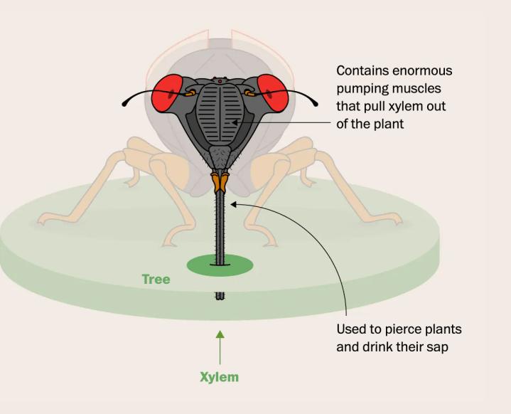 The Washington Post: Cicada Eating
