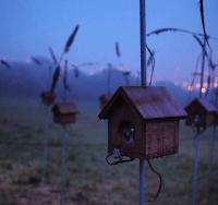 For the birds, brighton festival