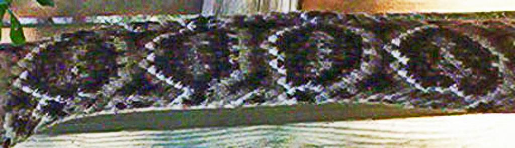 western diamondbacked rattlesnake