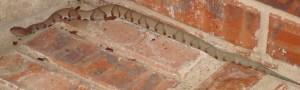 Southern Copperhead (Agkistrodon contortrix contortrix), Dana T., Allen, TX, 05.02.09--Full Body