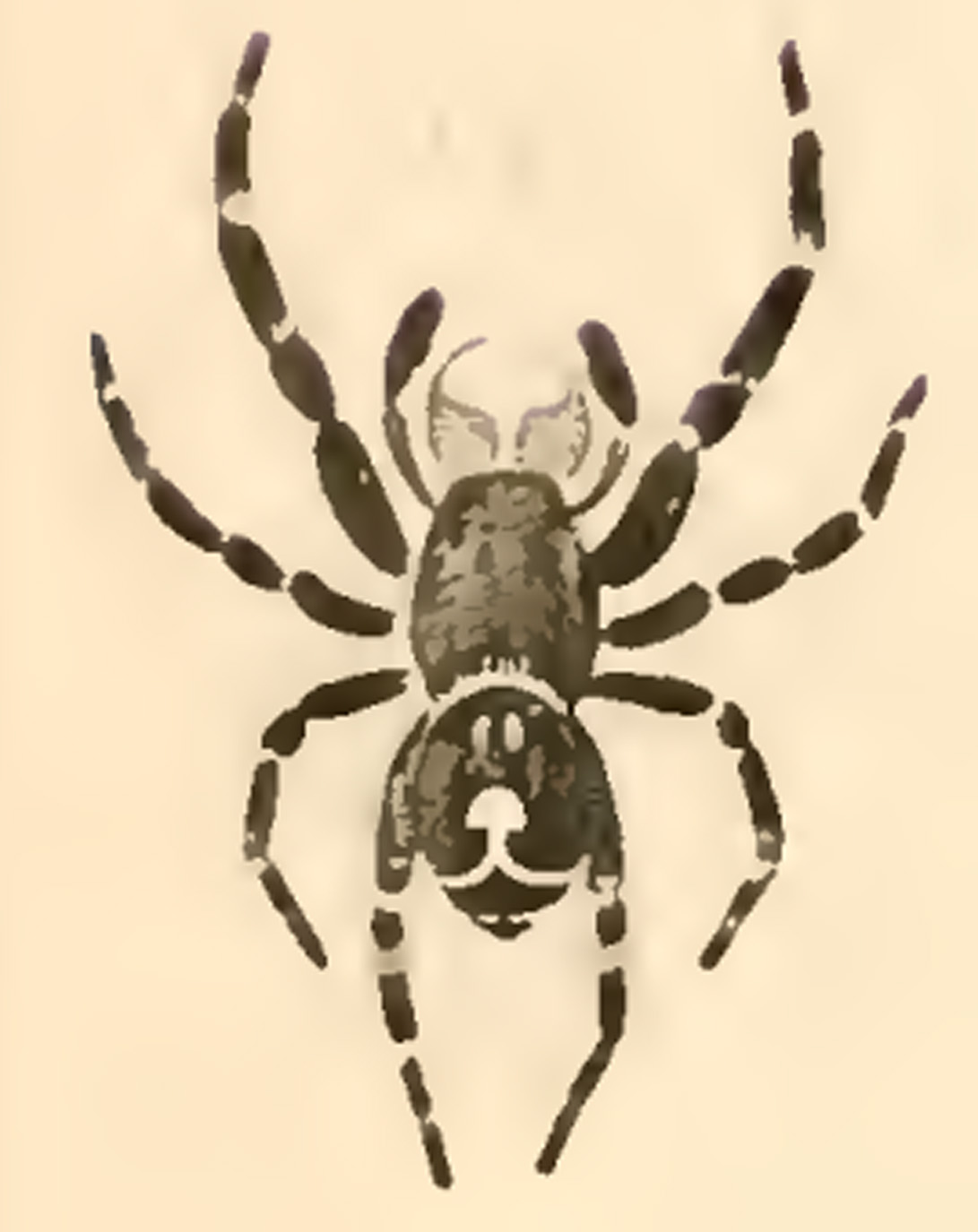A Bold Jumping Spider From San Antonio Texas Bugs In The News Snake Anatomy Diagram Bugsinthenews Jumper Male As Drawn 1845 By Nicholas Marcellus Hentz