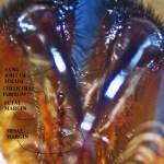 Cyrtaucheniidae: Myrmekiaphila; ventral chelicerae, annotated; Dave P,; Cresson, TX---1 Mar 2011