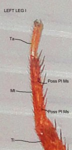 008. Distal Left Leg I