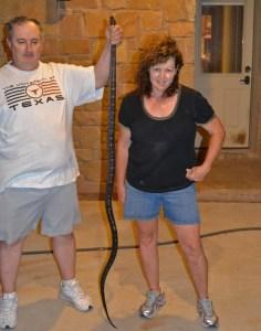 Texas Rat Snake (Elaphe obsoleta lindheimeri); T.K., Dripping Springs, TX --- 15 Apr 2012