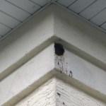 Animal nest 1