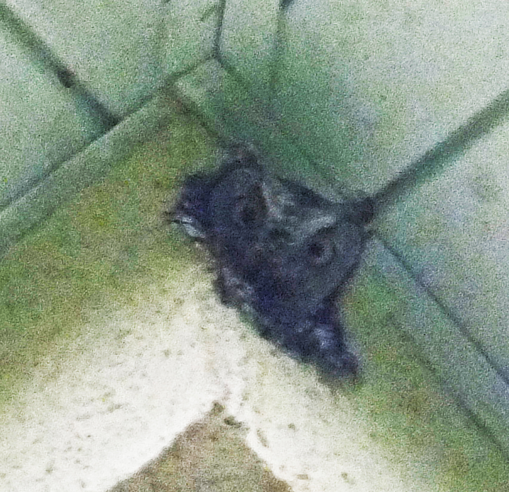 Commercial Flooring Companies Austin Texas: An Invasion By Great Horned Owls Of A Commercial Structure