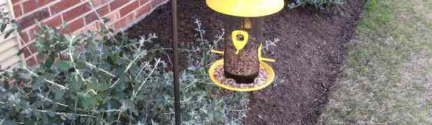 The Truth about Bird Feeders