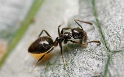Have you had enough of those pesky house ants?
