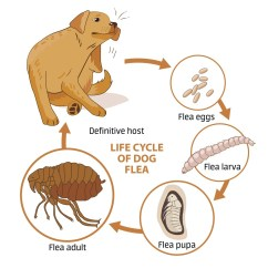 Can Dog Fleas Live In Sofas Restoration Hardware Maxwell Leather Sofa Reviews Flea Control And Treatments For The Home Yard Garden