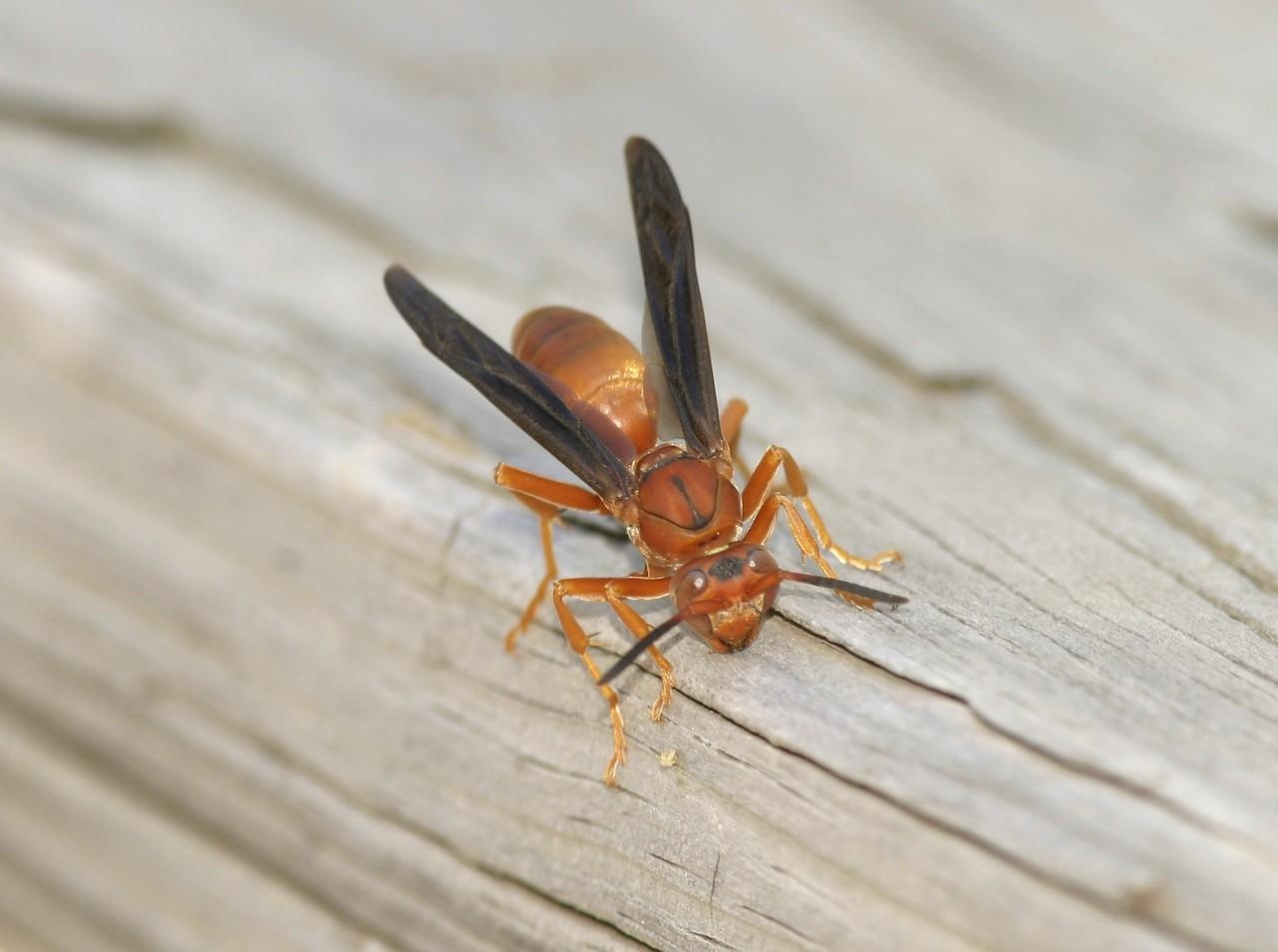 Wasp Fogger Attic