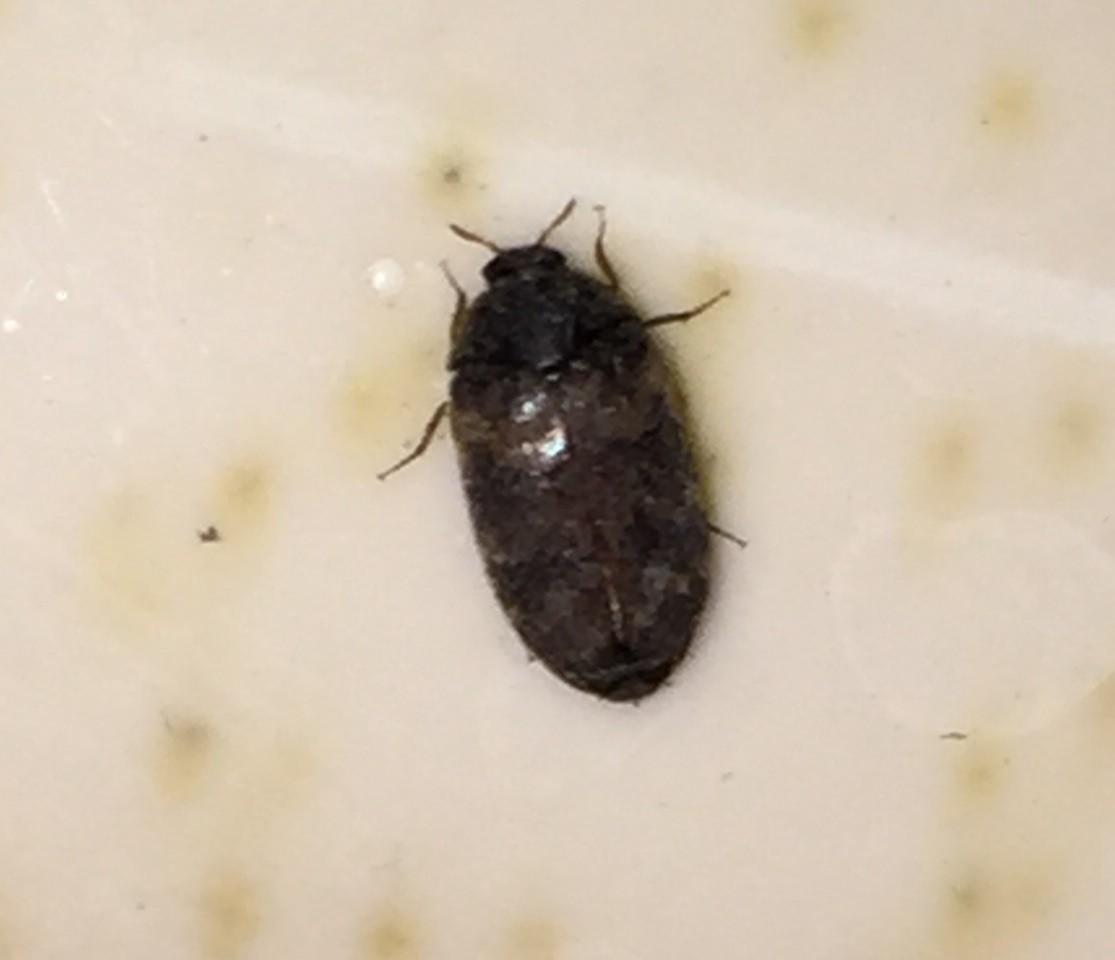 Oval Shaped Bug Bite