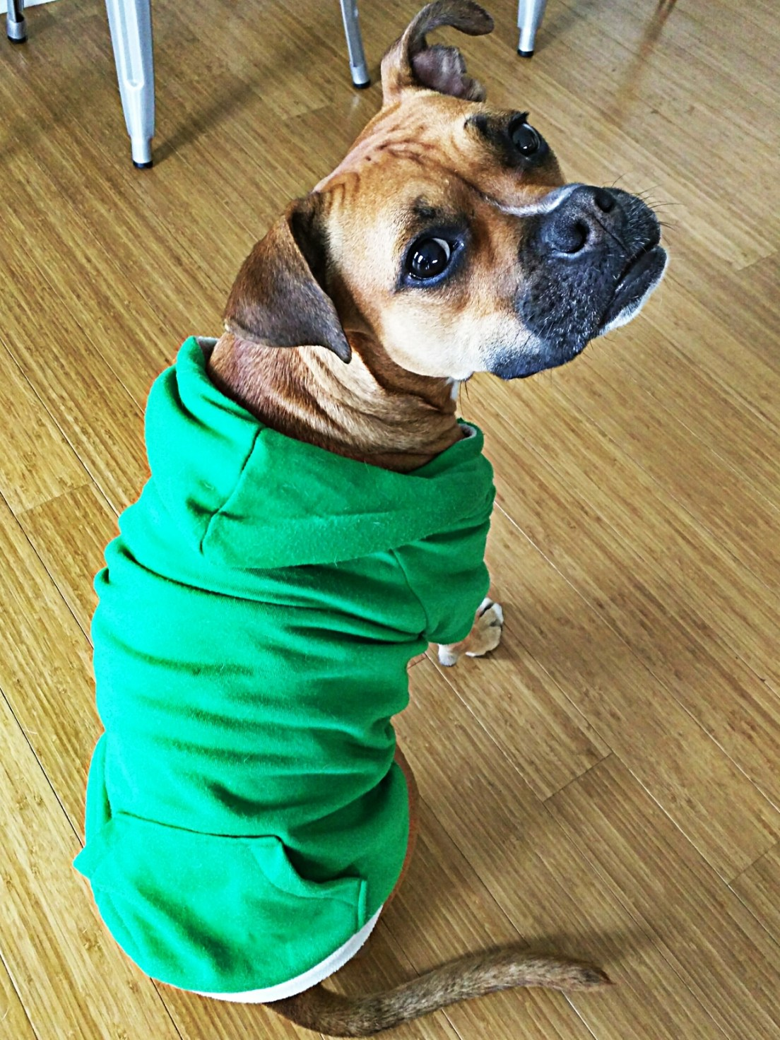 dog wearing sweatshirt