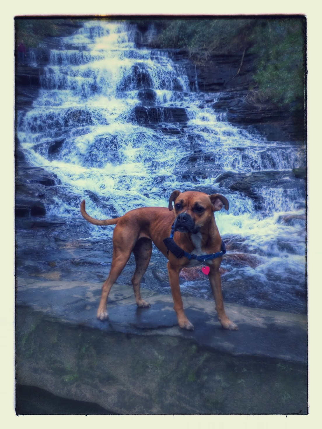 dog by minnehaha waterfall