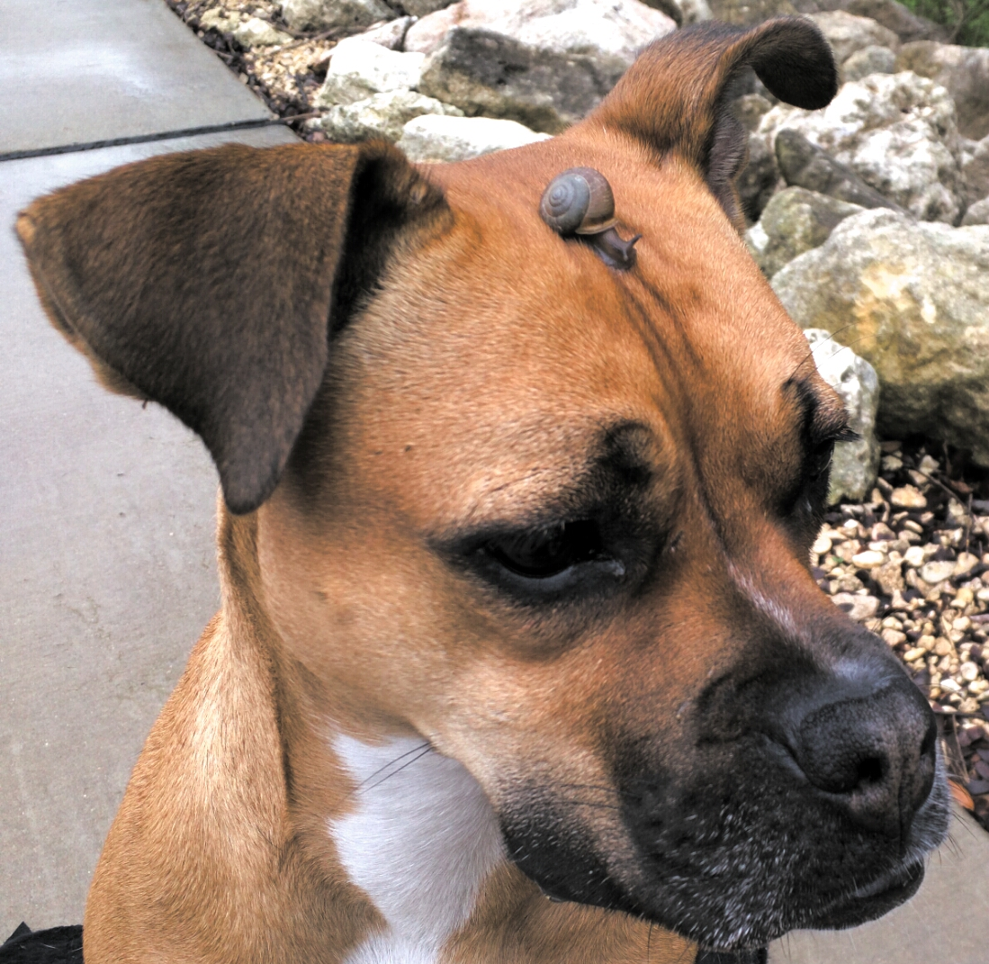 dog with snail on head