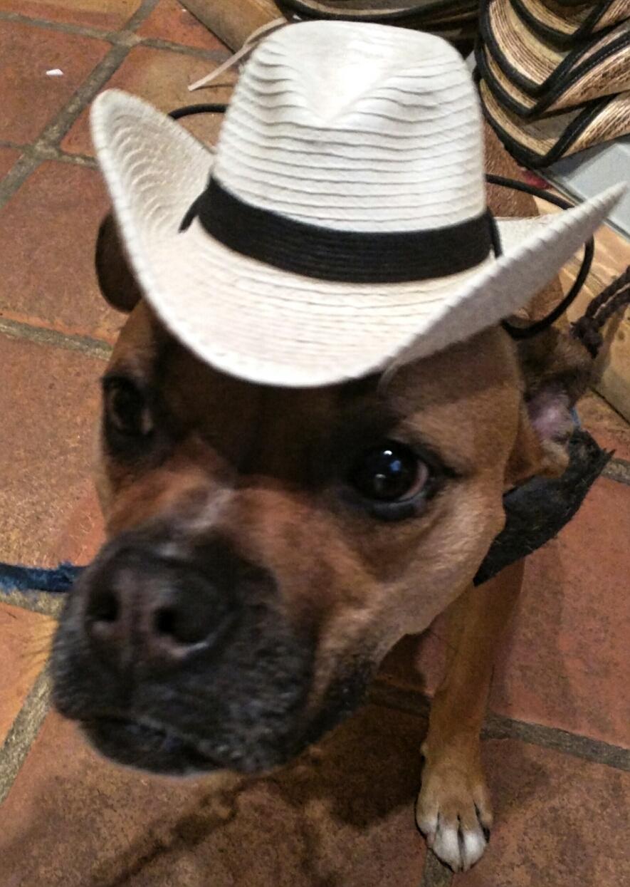 dog wearing cowboy hat