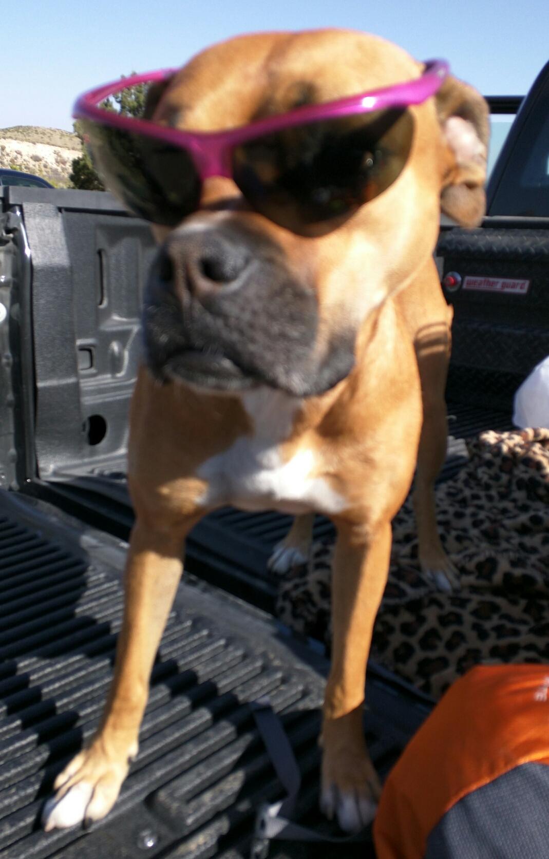 dog wearing shades