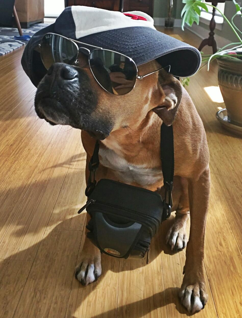 dog wearing camera, hat, glasses