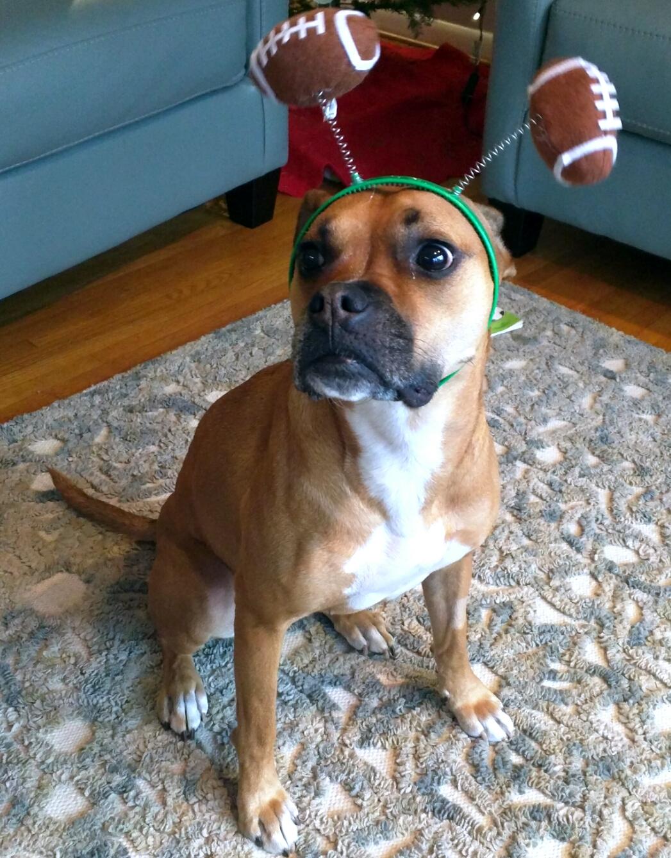 dog with football headband