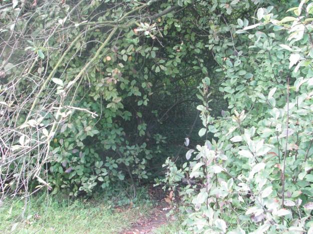 An entrance to a secret den?