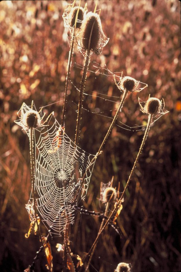 Photo by William Radke, U.S. Fish and Wildlife Service (Public domain)