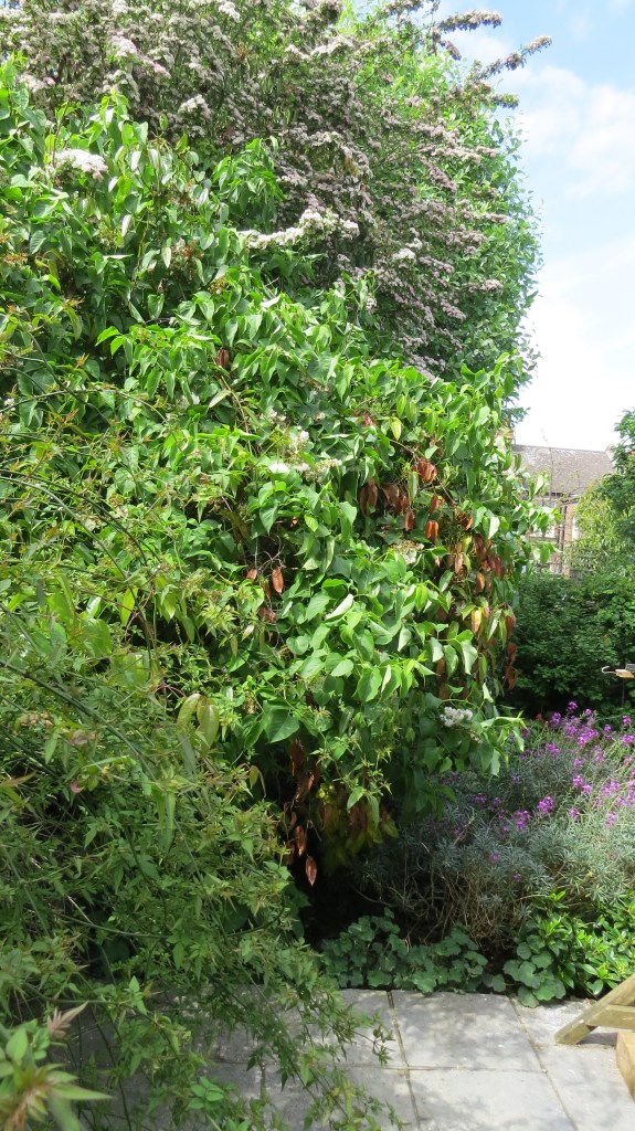 View of the left-hand side of the garden, with white lilac, hawthorn and whitebeam
