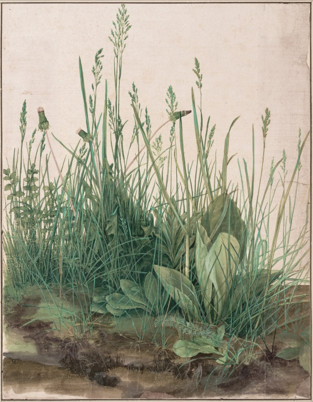 The Large Piece of Turf (Albrecht Durer, 1503)