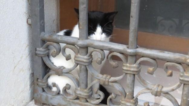 Little blind cat on the Fondamenta Della Sensa, soaking up the late autumn sun