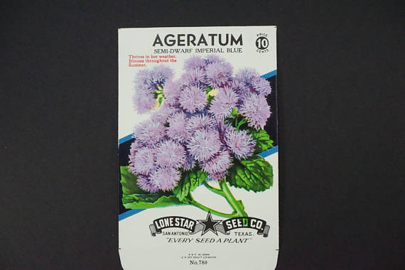 Photo Two from https://www.etsy.com/uk/listing/573349750/seed-package-lone-star-seed-co-ageratum?ref=related-5