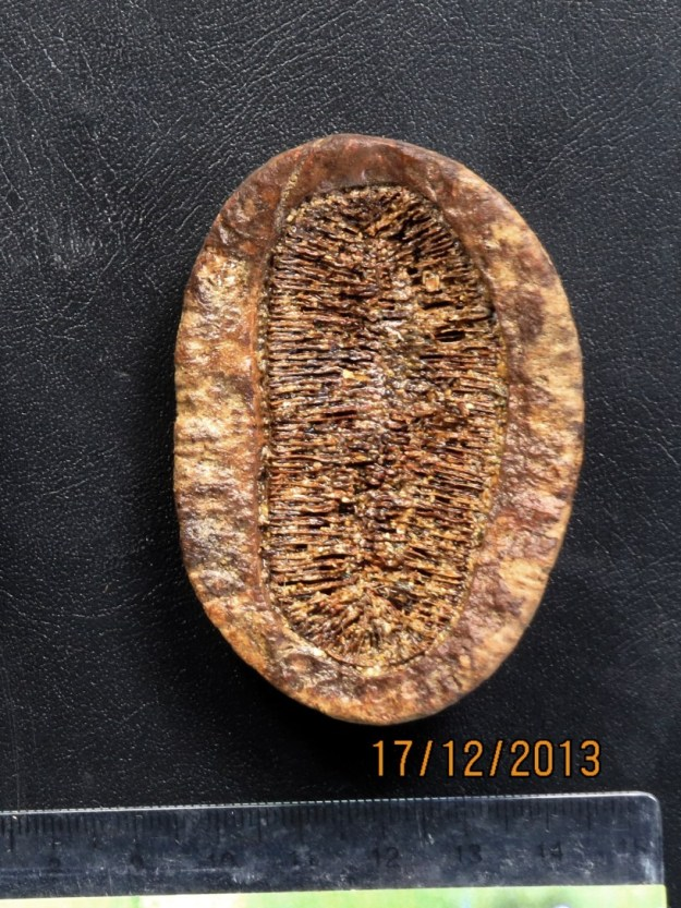 Photo One from https://seedsofborneo.com/2018/12/11/mezzetia-macrocarpa-drift-seed/