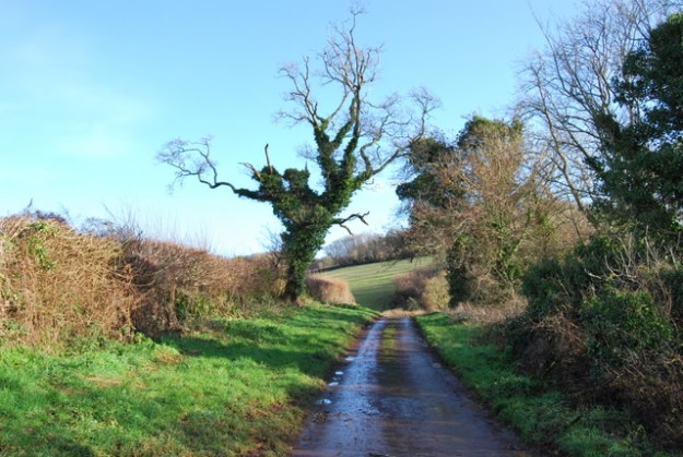 Photo Five by Paul Hutchinson / Ivy covered tree, Marldon Lane