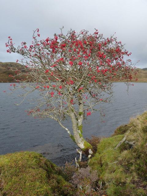 Photo Five by Brian Turner/Rowan Tree on Feinn Loch - Kilmelford