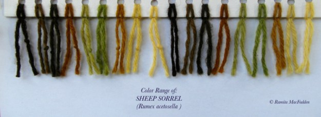 Photo Six from https://forestandthespirit.wordpress.com/2016/05/31/plant-dyes-sheep-sorrel/