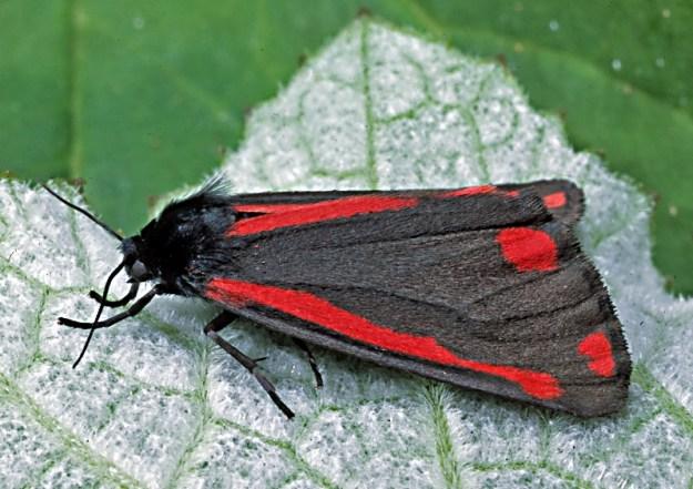 Photo Fifteen by Nzhymenoptera, CC0, via Wikimedia Commons