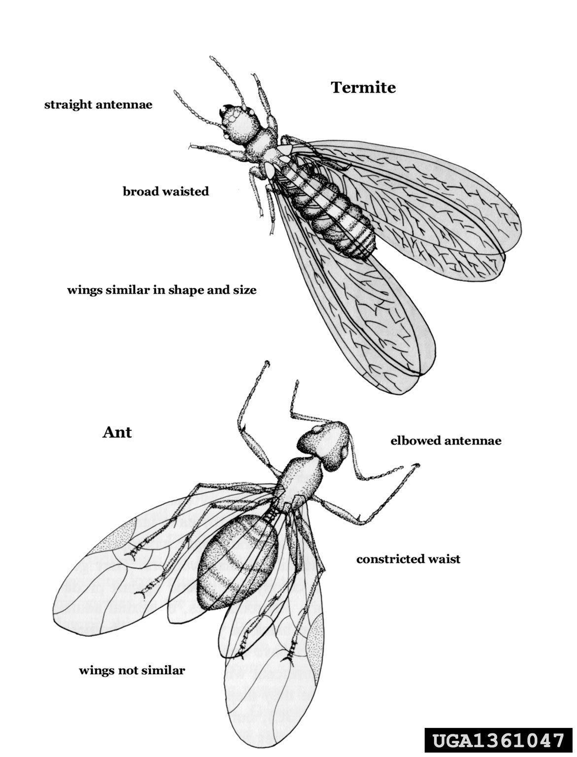 diagram of a pill bug 2007 f150 alarm wiring termites isoptera 1361047