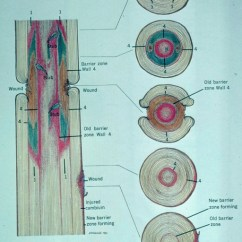 Diagram Of A Pill Bug 1988 Winnebago Chieftain Wiring Compartmentalization Decay In Trees (codit)-1507041