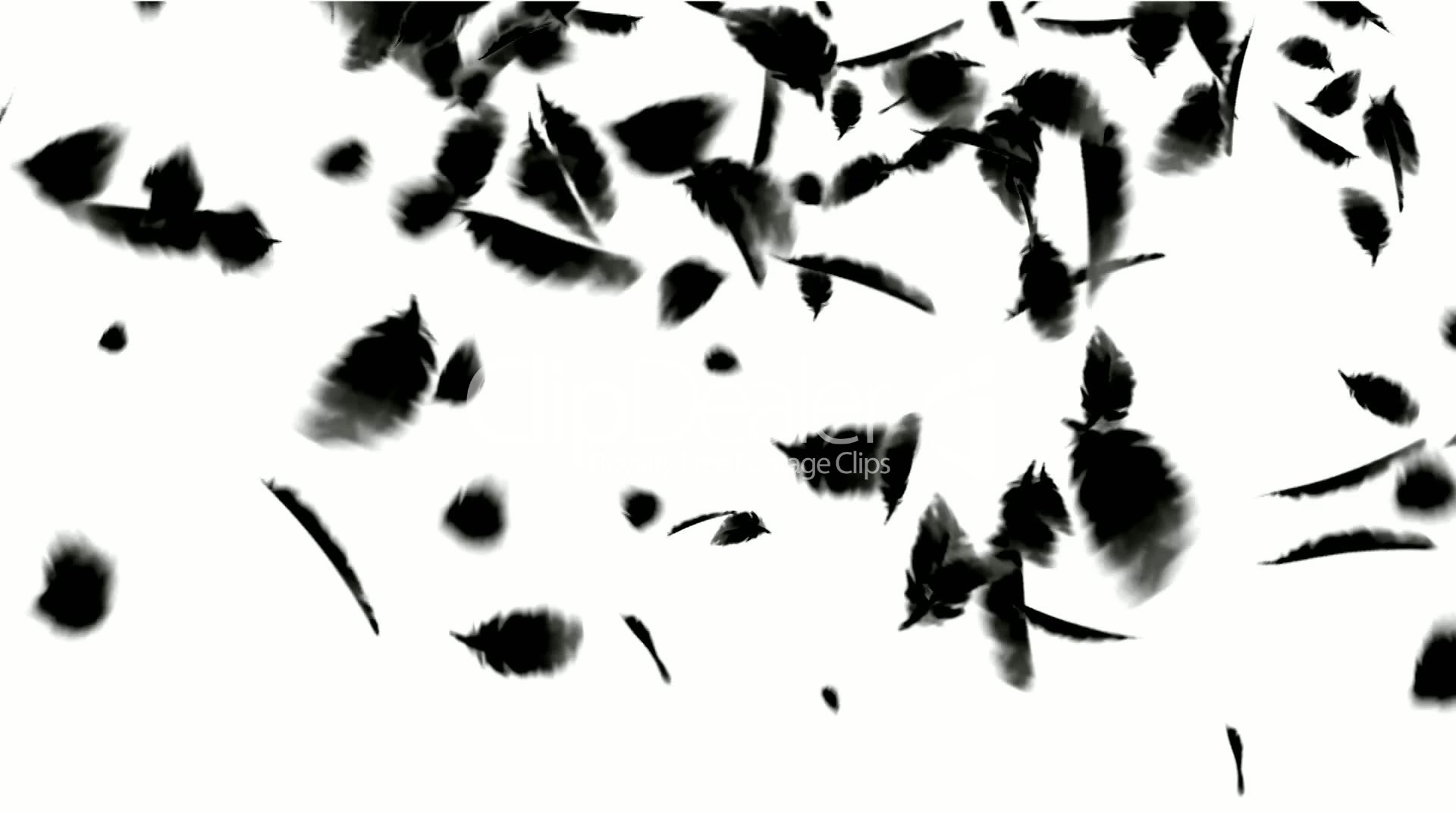 Falling Feathers Wallpaper Black Bird Feathers Falling Feathers Fossil Plastic Duck